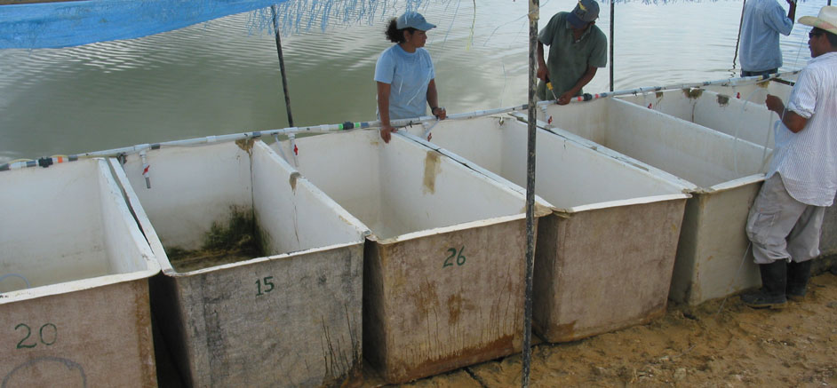 how to write a feasibility study on fish farming